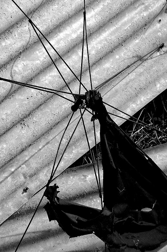 OldWolf Foto - Umbrella